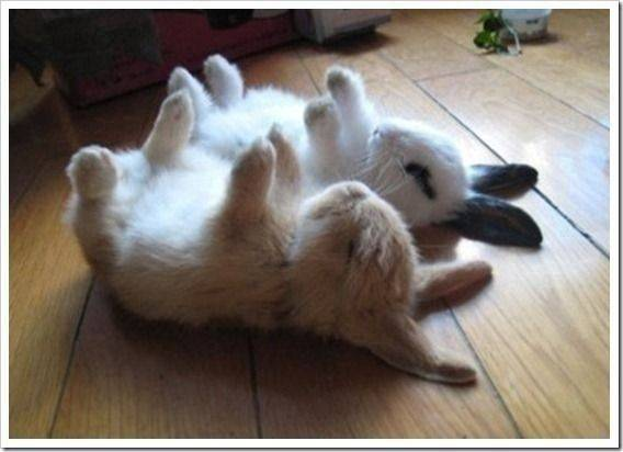 sleeping-bunnies.jpeg