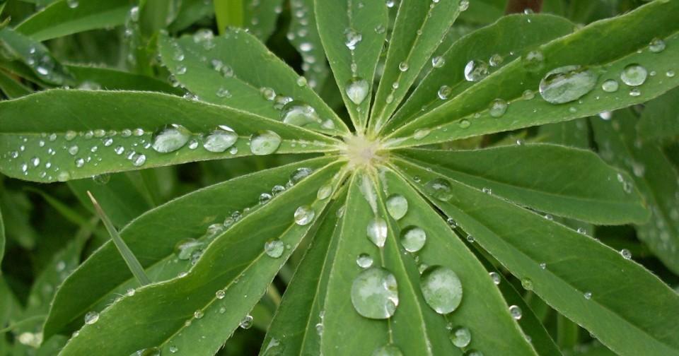 plantas1 (1)