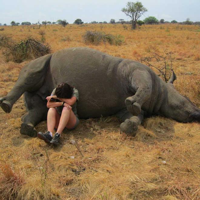 AfricaDoSul_foto_funcionaria_chorando_rinoceronte_morto